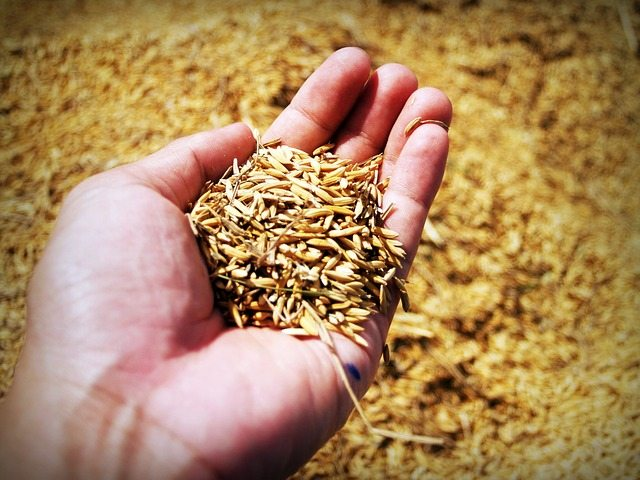 How to properly dispose of treated seed