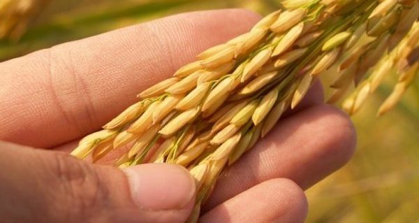 What to do with excess treated seed