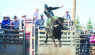 Stampede champs do well at 20th Bull-a-rama