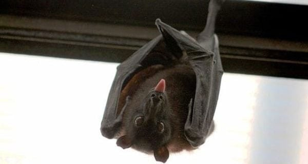 'There's a bat in the house!'