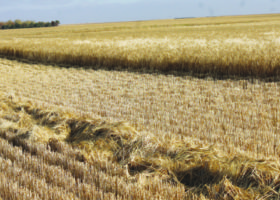 Harvest moving quickly across region