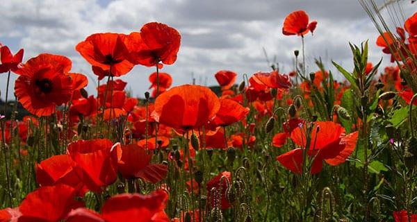 Was the Armistice of 1918 a triumph or tragedy?