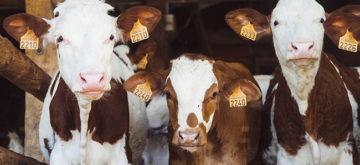 Job rebound sluggish in Canada's agri-food sector