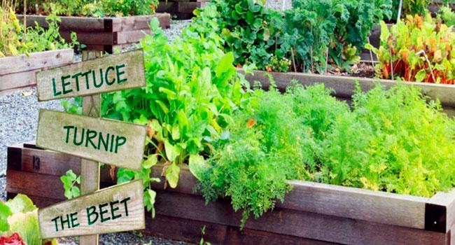 Canadians embracing the joy of pandemic gardening