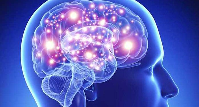 Brain molecule helps 'wake up' cells that could help tackle MS: study